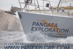 PanExplore ORGANIZATIONS (for web)_Page_8